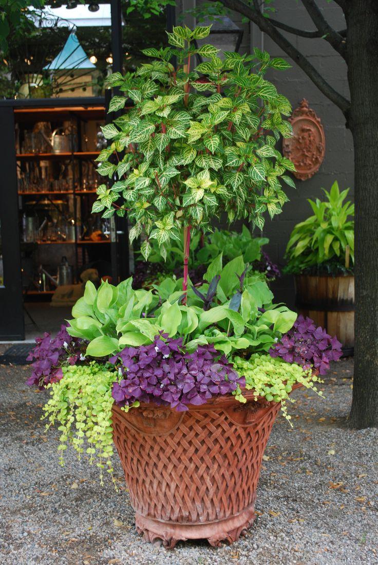 shade-tolerant-plants
