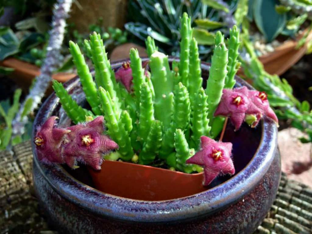 small-succulents