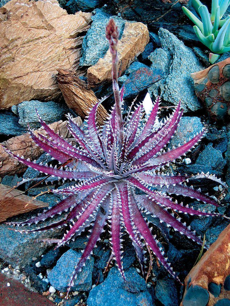 succulent-plant-flowers