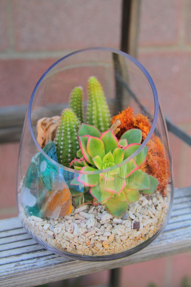succulent-plants-mini