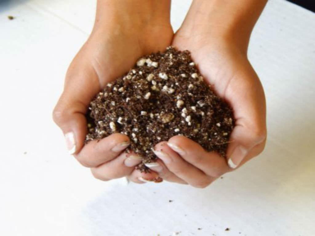 succulents-fertilizer