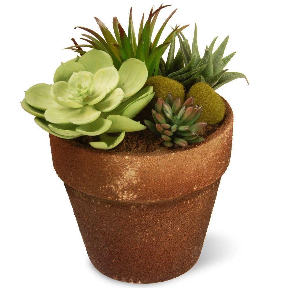 succulents-house-plants