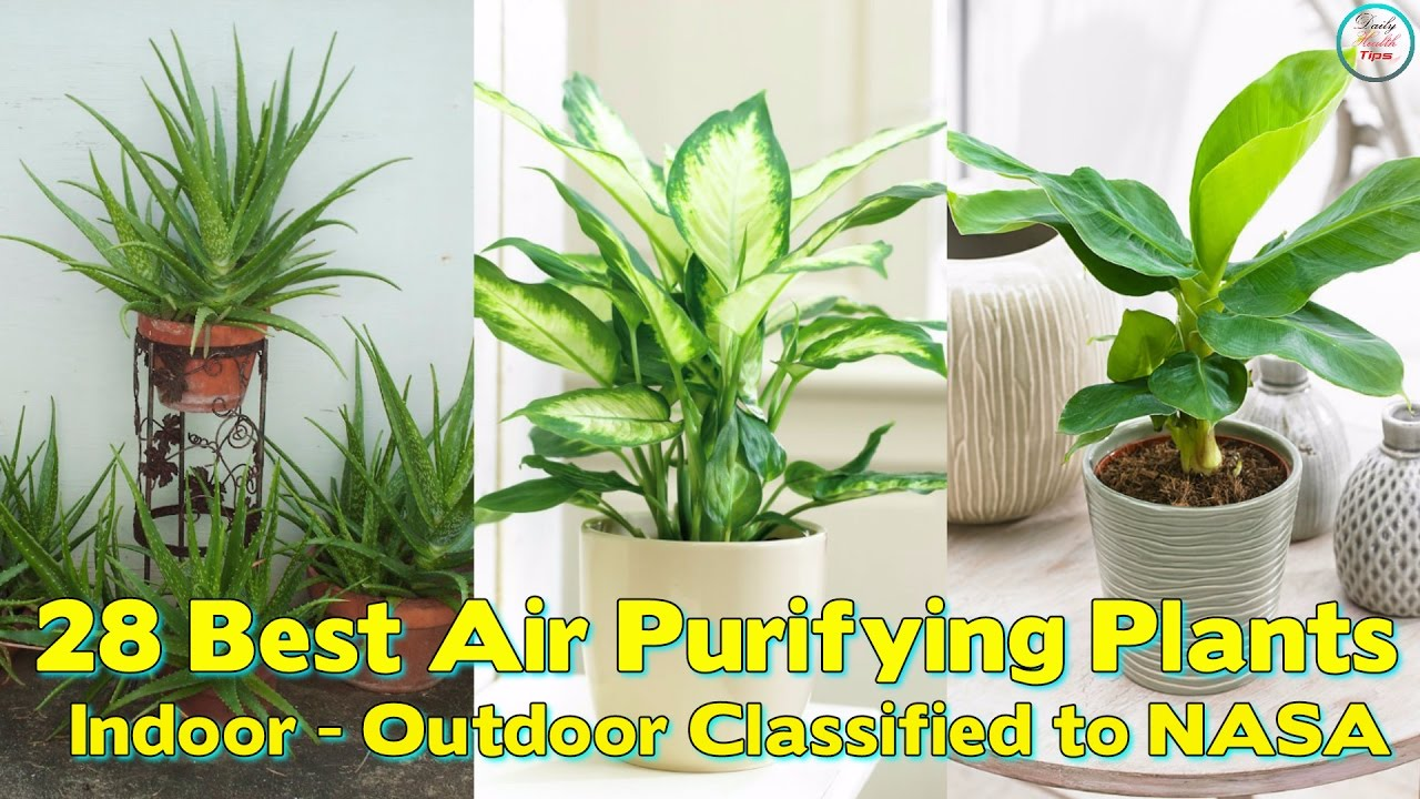 what-is-the-best-indoor-plant-to-clean-the-air