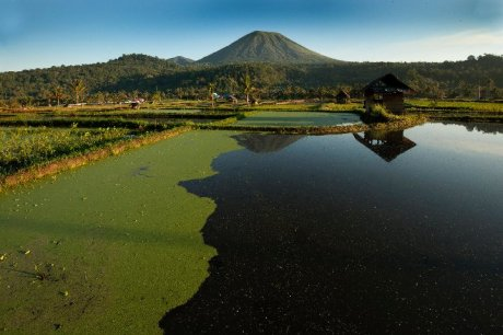 Discover Sulawesi