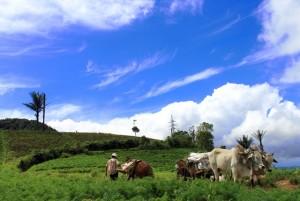 Minahasa Highlands, Family Vacation