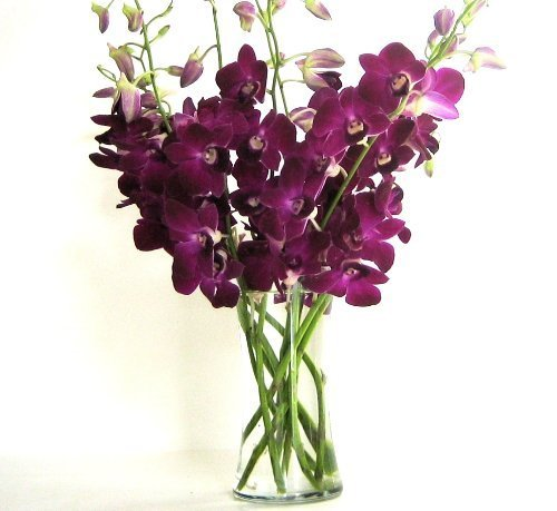 Fresh Flowers – Deep Purple Dendrobium Orchids with Vase