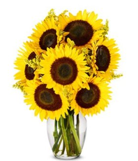 Flowers – Stunning Sunflowers (FREE Vase Included)