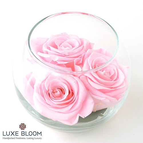 Luxe Bloom | Ballet Pink Preserved Roses last 60 days | Best Valentine's Day Gift | 3 pink roses & greens in a 4″ glass bubble