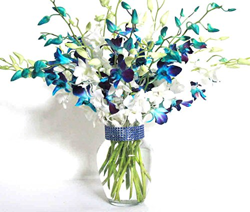 20 Blue and White Orchids with Vase w/ Rhinestone Ribbon