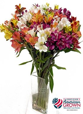 American Grown Alstroemeria – Fresh Cut Flowers – Single Bouquet – 25 Stems – Free Fast Shipping