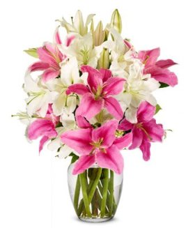 Flowers – Stunning Pink and White Lilies (FREE Vase Included)