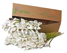 White Mini Calla Lilies 100 Stems, Callafornia Callas