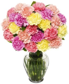25 Stem Pastel Carnation Bunch – With Vase