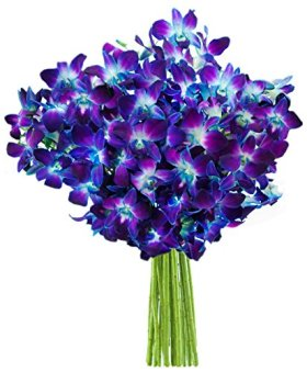 Blue Orchid Fresh Flower Bouquet (20 Stems) – Without Vase