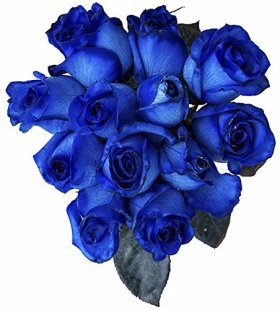 24 Stems – Fresh Cut Blue Roses from Flower Explosion