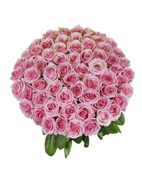 50 Birthday Farm Fresh Pink Roses By justFreshRoses