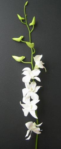 Fresh Flowers – 20 Long Stemmed White Dendrobium Orchids