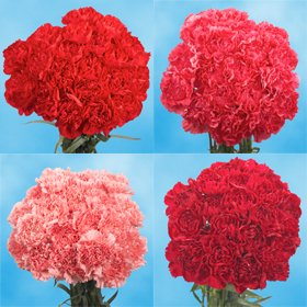 Cheap Valentine's Day Carnations | 200 Valentine's Day Carnations