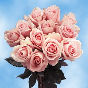 Fresh Pink Roses Flowers | 50 Pink Color Roses Just Perfect