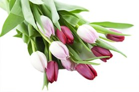 Temptation by Tulip Bouquet (10 stems) – Without Vase