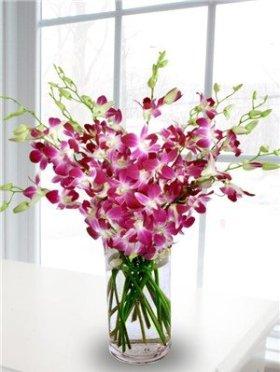 Fresh Flowers – 20 Premium Purple Dendrobium Orchids with Vase