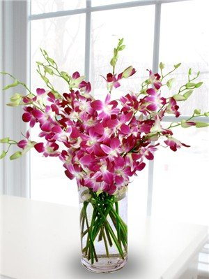 Fresh Flowers – 20 Premium Purple Dendrobium Orchids with Vase