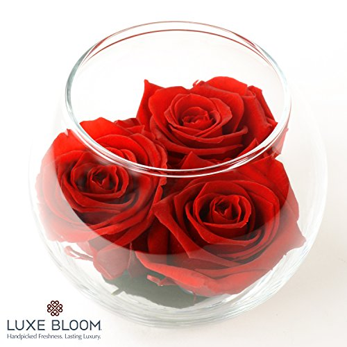Luxe Bloom | Crimson Preserved Roses last 60 days | Best Gift for Mother's Day or Any Occasion | 3 crimson roses & greens in a 4″ glass bubble