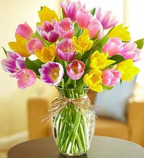 1-800-Flowers – Timeless Tulips – Large