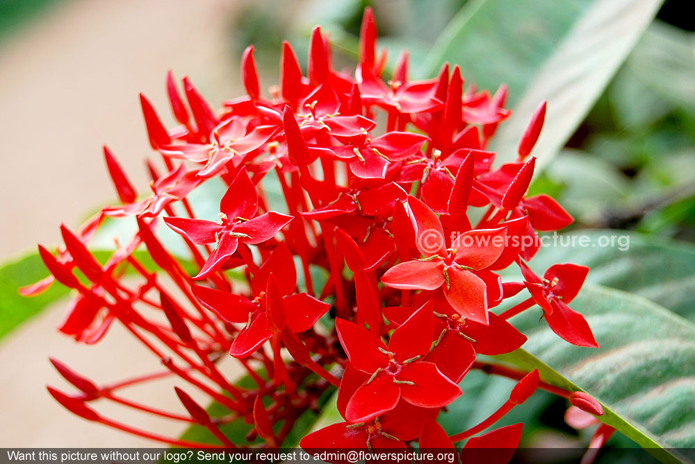Red Cactus Flower Name