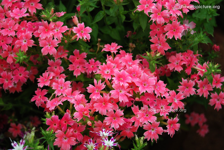 Mixed Flower Pots