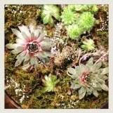 terrariums - small