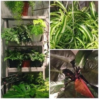 collage plants 1