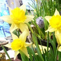 Winter Blues? Spring Bulbs!