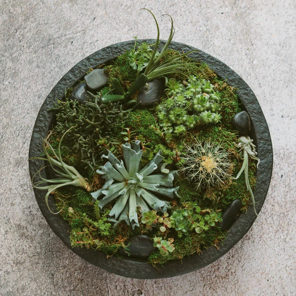 A low-maintenance succulent planter.