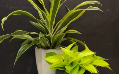 Plant profile: Air Cleaners
