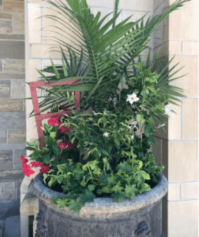 afternoon sun planter