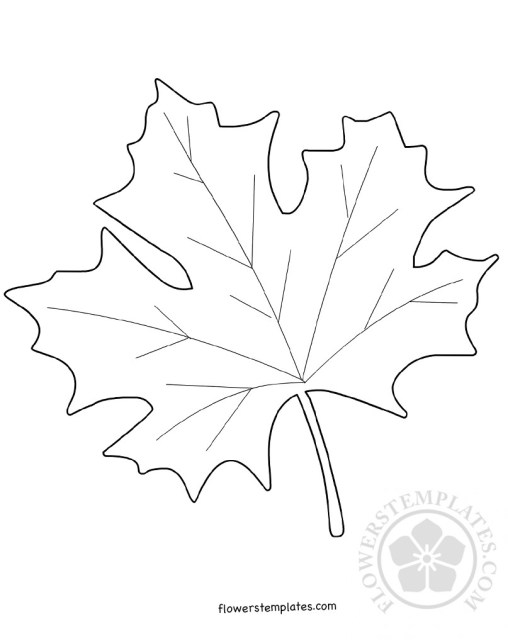 Maple Leaf Template Coloring Page