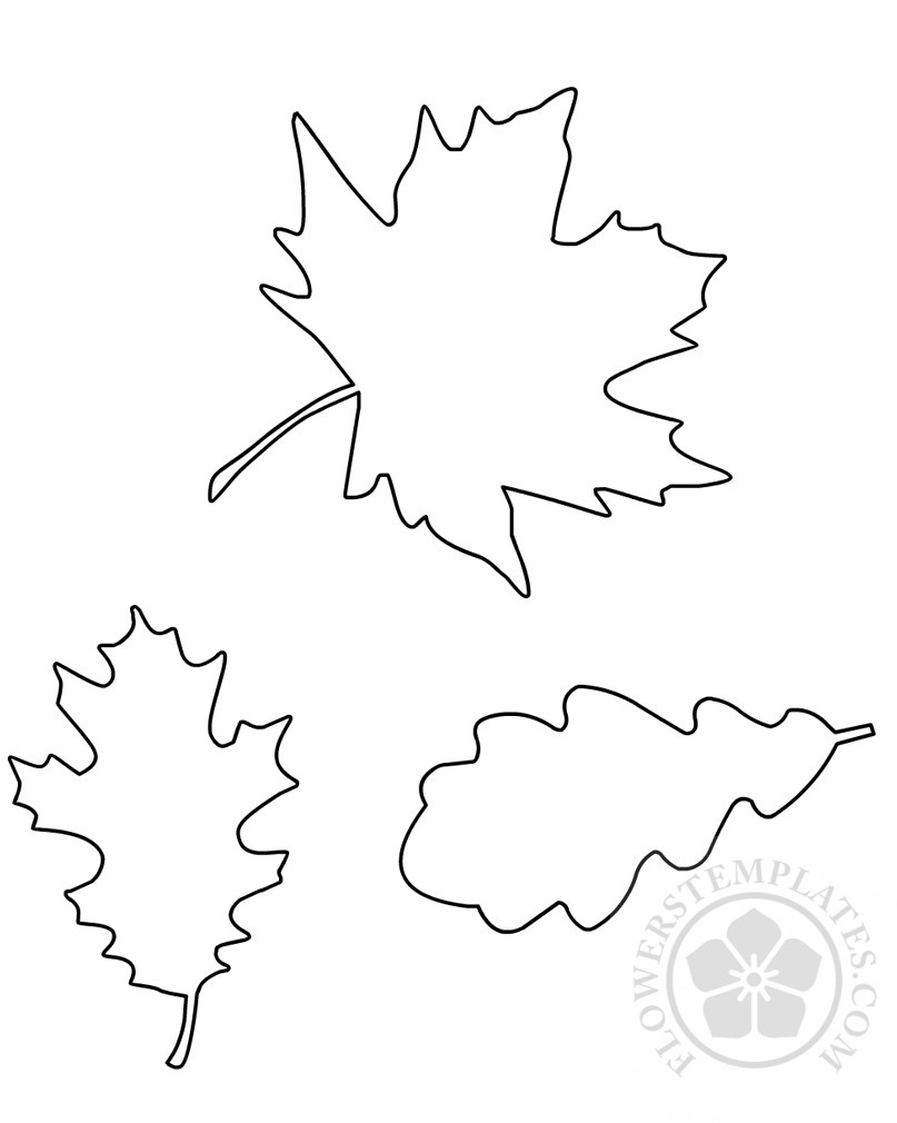 autumn leaf outline template flowers templates