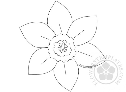 Daffodil flowers templates for Template of a daffodil