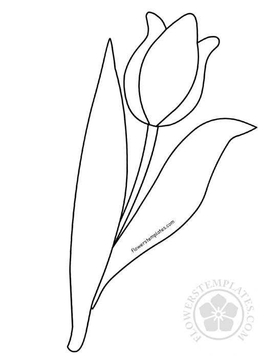 Tulip Flowers Templates