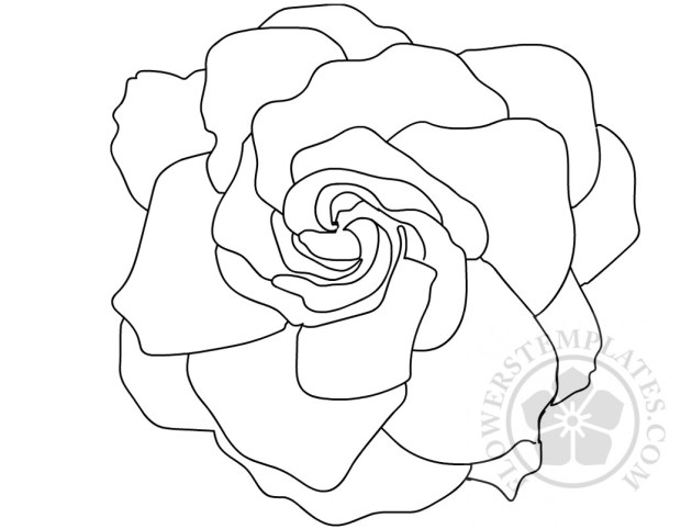 Drawing Flower Gardenia Coloring Page Flowers Templates