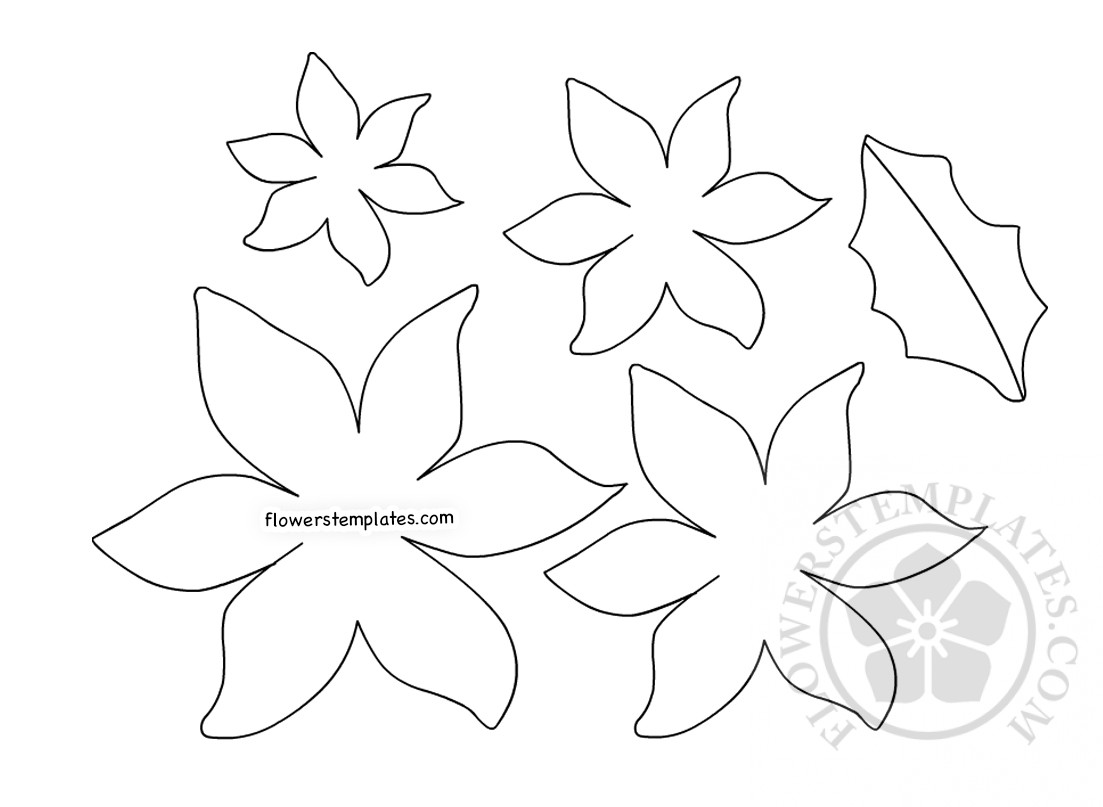 graphic regarding Poinsettia Pattern Printable named Do-it-yourself Paper Poinsettia template printable Bouquets Templates