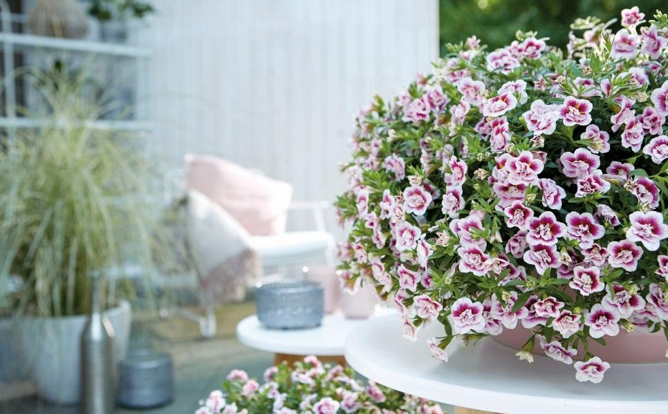 Best indoor flowers