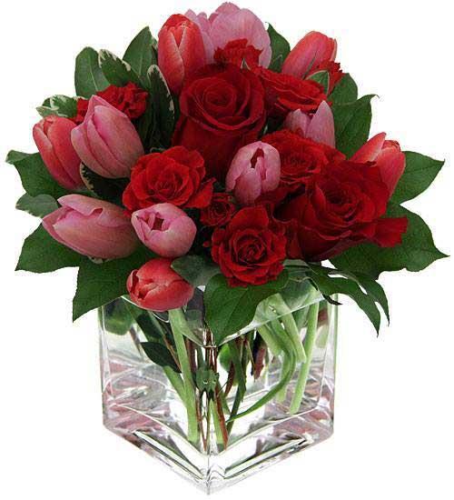 spring-in-square-vase--(1)