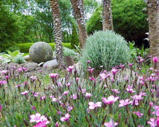 Сантолина (santolina) и гвоздика травянка (dianthus deltoides)