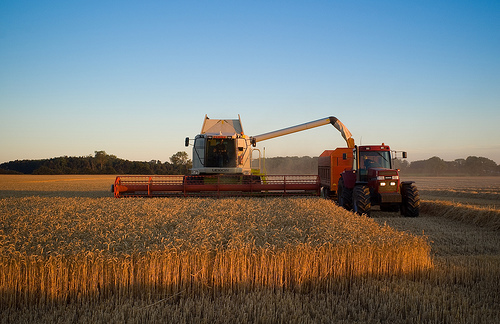Wheat harvest before sunset near Branderslev, Lolland by Lars Plougmann via Flickr