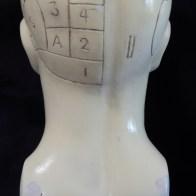 Phrenology Skull (back view)