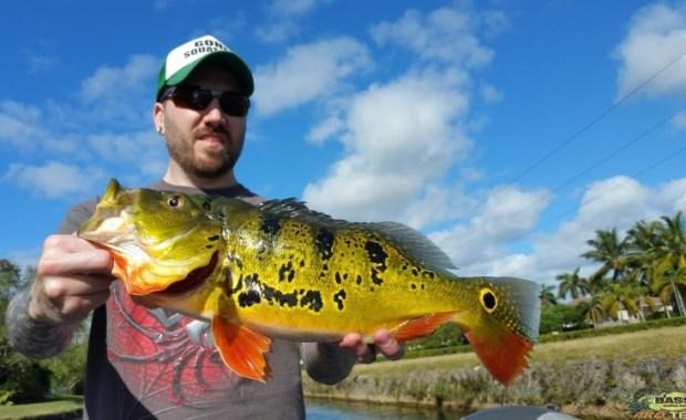 Miami Peacock Bass Fishing Guide Capt Robert Miley