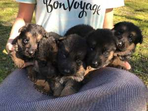 Girls 2/2017 litter