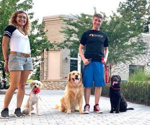 Dog Training for Gaithersburg, MD